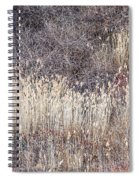 Dry Grasses And Bare Trees In Winter Forest Spiral Notebook