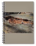 Dry Rotting Tree Spiral Notebook