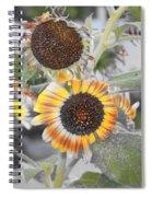 Dry Sunflowers Spiral Notebook