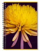 Dual Coloured Chrysanthemum Spiral Notebook
