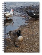 Duck Duck Goose Spiral Notebook