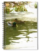 Duck Swimming In A Frozen Lake Spiral Notebook