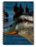Duck Watching Ducks Spiral Notebook