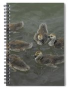 Ducklings Spiral Notebook