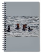 Ducks In Pond Spiral Notebook
