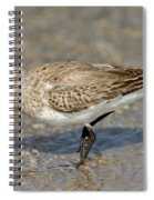 Dunlin Calidris Alpina In Winter Plumage Spiral Notebook