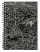 Dusk Fawn Spiral Notebook