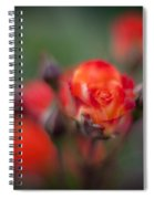 Dusk Romantic Rose Spiral Notebook