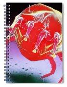 Dust Mite Spiral Notebook