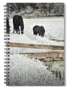 Dutch Friesian Horses Behind A Wooden Fence In A Pasture Spiral Notebook