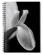 Dutch Iris Flower Macro Black And White Spiral Notebook