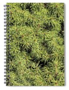 Dwarf Evergreen Spiral Notebook