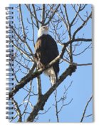 Bald Eagle Sunny Perch Spiral Notebook