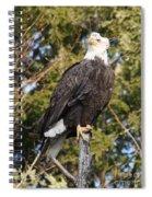Eagle 1985 Spiral Notebook