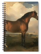 Eagle - A Celebrated Stallion Spiral Notebook