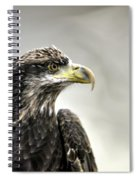 Eagle In The Mist Spiral Notebook