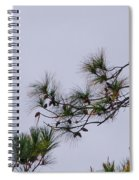 Eagle In The Pines Spiral Notebook