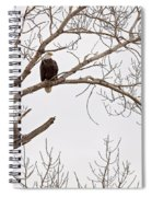 Eagle In Tree Spiral Notebook