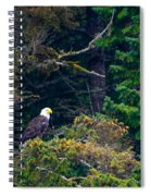 Eagle In Trees  Spiral Notebook