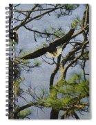 Eagle Pair And Nest Spiral Notebook