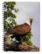Eagle Portrait IIi Spiral Notebook