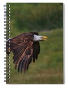 Eagle With Prey Spiral Notebook