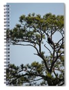 Eagles Perch Spiral Notebook