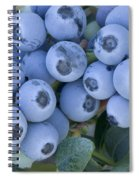 Early Blue Blueberries Spiral Notebook