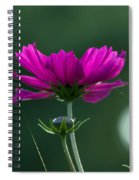 Early Dawns Light On Fall Flowers 03 Spiral Notebook