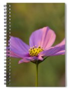 Early Dawns Light On Fall Flowers 05 Spiral Notebook
