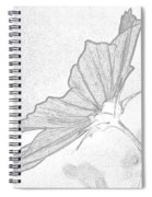 Early Dawns Light On Fall Flowers Bw Spiral Notebook