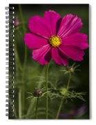 Early Dawns Light On Fall Flowers V 03 Spiral Notebook