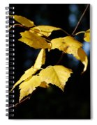 Early Fall Of  Downy Birch Spiral Notebook
