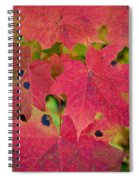 Early Fall Of Norway Maple Spiral Notebook