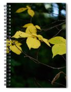 Early Fall Of Wych Elm Spiral Notebook