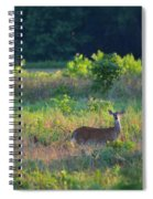 Early Morning Doe Spiral Notebook