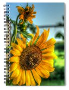Early Morning Sunflower Spiral Notebook