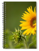 Early Morning Sunflowers Spiral Notebook