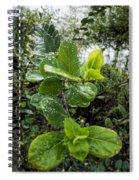 Early Rain  Spiral Notebook