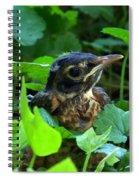 Early Robinhood Spiral Notebook