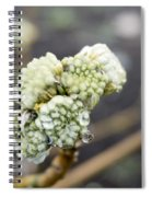 Early Spring 2 Spiral Notebook