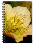 Easter Bloom 2014 Spiral Notebook