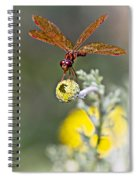 Eastern Amberwing Dragonfly Spiral Notebook