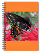 Eastern Black Swallowtail And Bee Balm Spiral Notebook