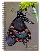 Eastern Black Swallowtail Spiral Notebook