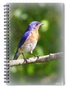Eastern Bluebird - After His Bath Spiral Notebook