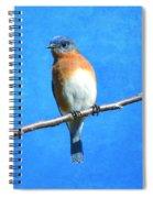 Eastern Bluebird II Spiral Notebook