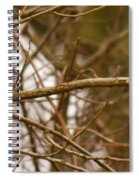 Eastern Bluebird Pair Spiral Notebook