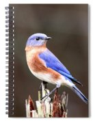 Eastern Bluebird - The Old Fence Post Spiral Notebook