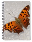 Eastern Comma Butterfly Spiral Notebook